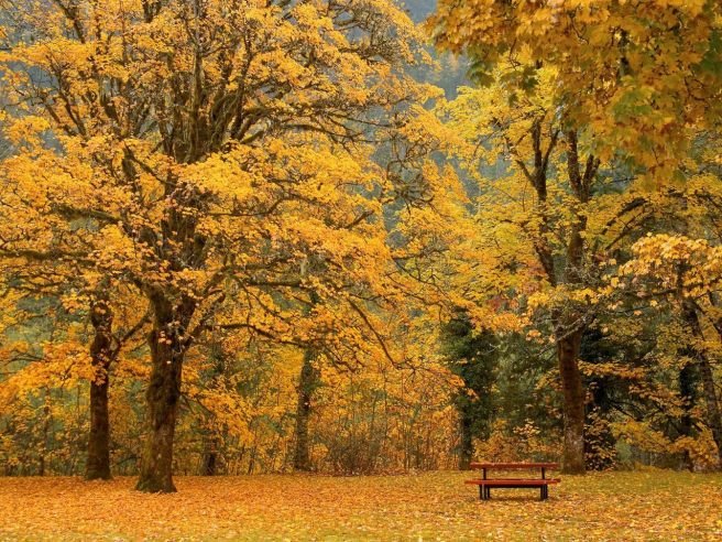 Beaux-arbres-dautomne-_-www.images-libres.net_